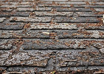 America Top Quality Roofing Images